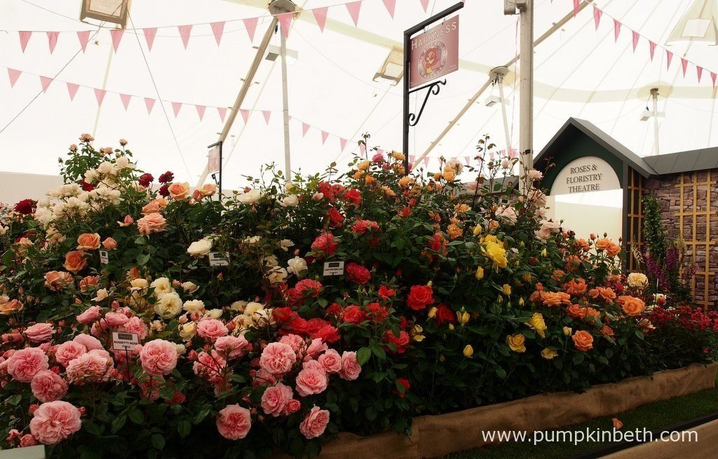 Harkness Roses were awarded a Silver-Gilt Medal by the RHS judges, inside The Festival of Roses Marquee, at the RHS Hampton Court Palace Flower Show 2016.