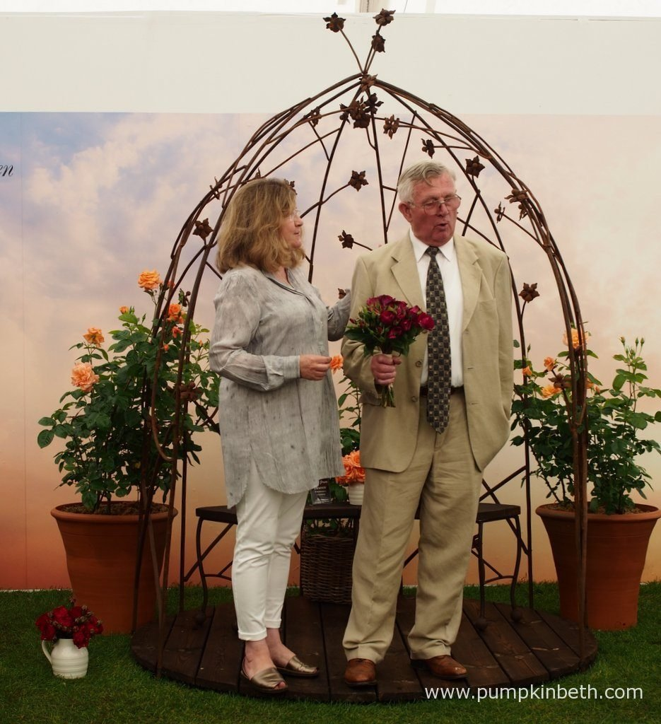Marilyn Stevens from Roses UK introduced each of the rose breeders and their roses. Marilyn is pictured here introducing Rosa '90th Celebration' inside The Festival of Roses Marquee, at the RHS Hampton Court Palace Flower Show 2016, Roses UK manage the Rose of the Year Trials and organise the Rose Festival at the RHS Hampton Court Palace Flower Show.