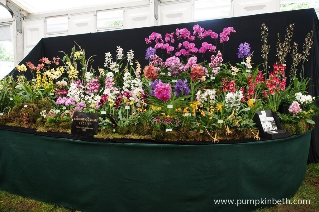 Burnham Nurseries created an absolutely fantastic exhibit of species and hybrid orchids, for the RHS Hampton Court Palace Flower Show 2016.
