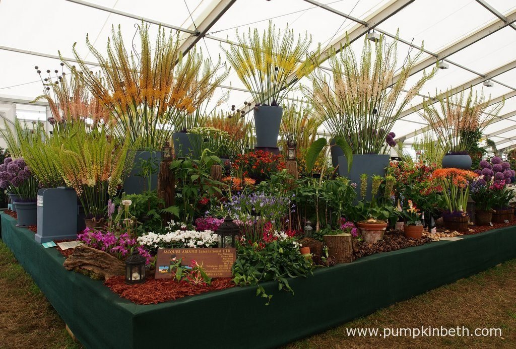 Jacques Amand International were awarded a Gold Medal by the RHS judges, for their spectacular exhibit, at the RHS Hampton Court Palace Flower Show 2016. Jacques Amand International's exhibit featured flowering plants grown from bulbs, which included Alliums, Eremurus to name but a few.