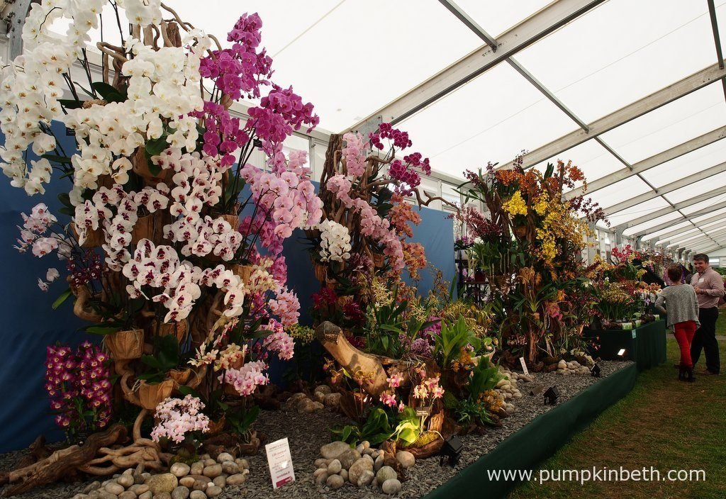 Vacherot & Lecoufle were awarded a Gold Medal, and the prestigious award of Best Exhibit in the Floral Marquee, at the RHS Hampton Court Palace Flower Show 2016. Vacherot & Lecoufle's exhibit featured a variety of flowering orchids, including Phalaenopsis, Oncidiums, and Paphiopedilums.