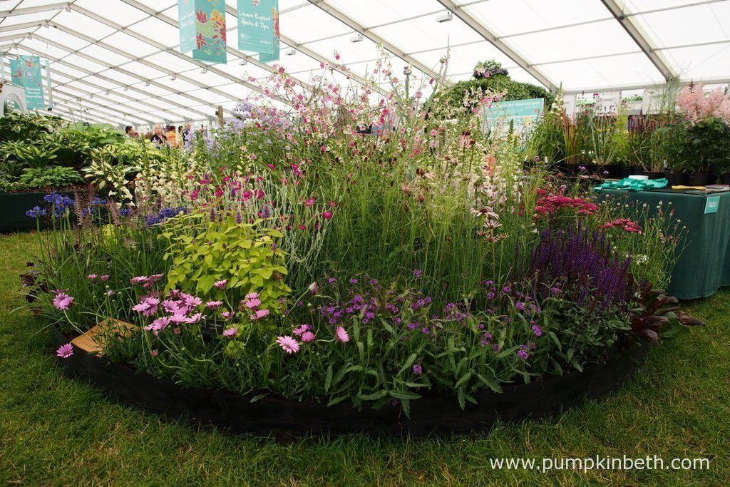 The RHS judges awarded Daisy Roots Nursery a Silver-Gilt Medal, at the RHS Hampton Court Palace Flower Show 2016.