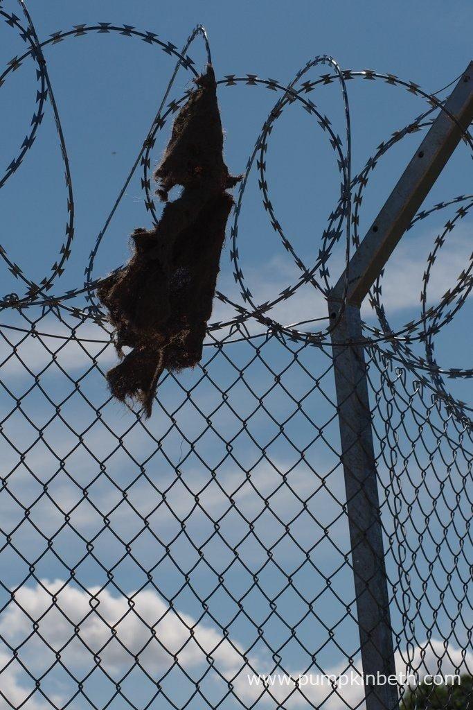 UNHCR: \'Border Control\' Garden - Pumpkin Beth
