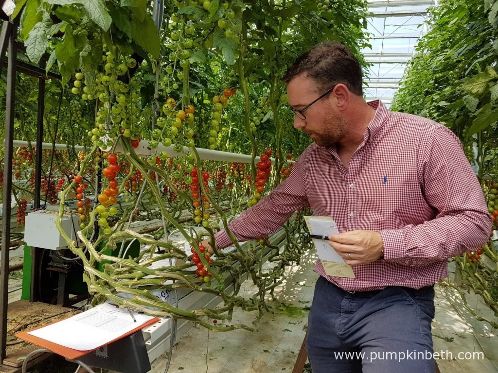 Paul Faulkner from Eric Wall Ltd, is pictured showing the National Vegetable Society members Eric Wall Ltd's growing crop of cordon grown, cherry tomatoes.