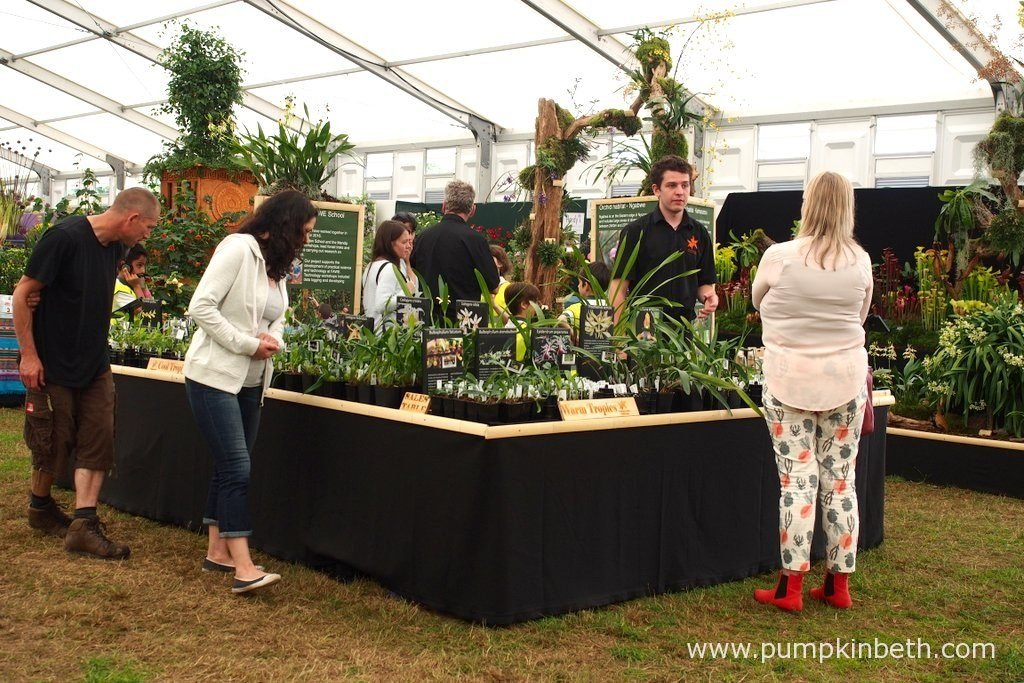 Jacob Coles giving advice on orchids to visitors at the RHS Hampton Court Palace Flower Show 2016.