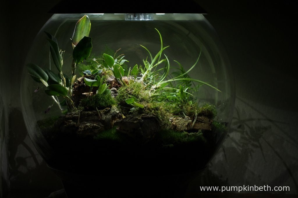 My BiOrbAir Terrarium is pictured here on the 13th August 2016.