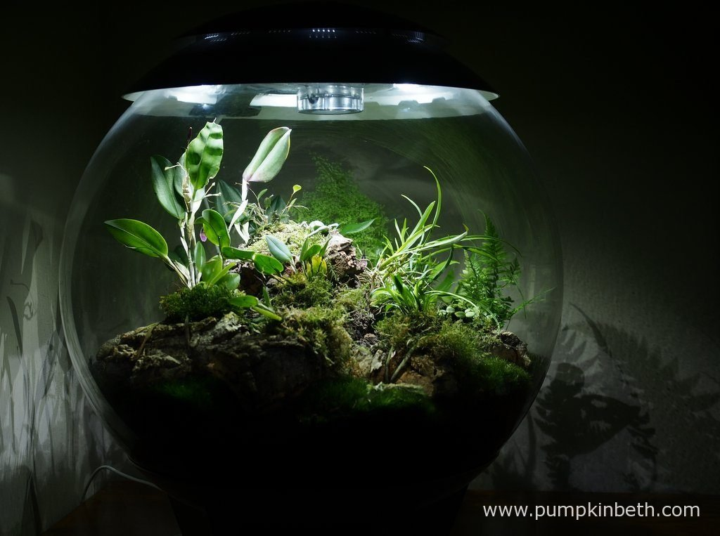 My BiOrbAir terrarium as pictured on the 3rd September 2016.