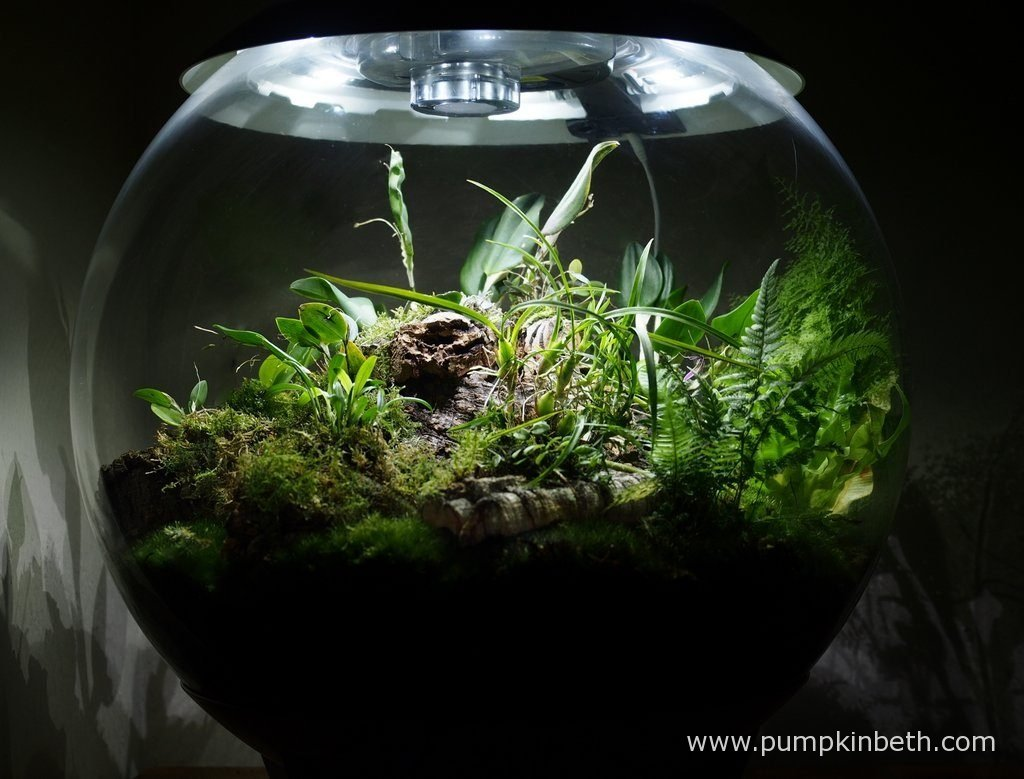 My BiOrbAir terrarium, as pictured on the 3rd September 2016.