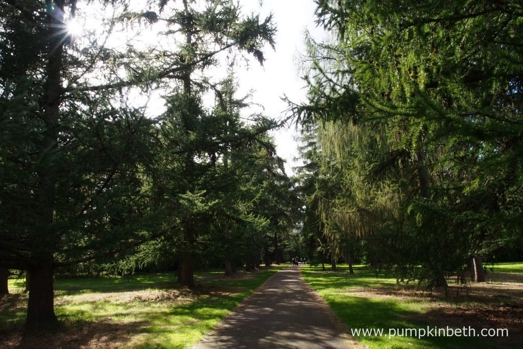 At the Royal Botanic Gardens at Kew, you can walk through avenues of beautiful, rare, and ancient trees, which will inspire and uplift you at any time of year.