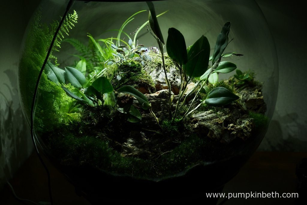 Another view of my BiOrbAir terrarium. Pictured on the 10th October 2016.