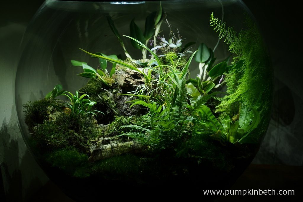 My BiOrbAir terrarium, as pictured on the 10th October 2016. Inside this terrarium, the ferns are growing well. Nephrolepis exaltata 'Fluffy Ruffles' has grown to quite a height, as you can see in this photograph.