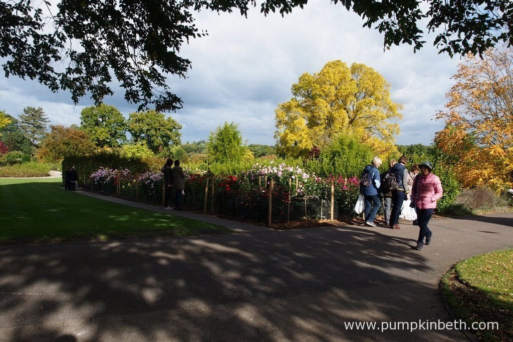 There's plenty of autumnal colours to enjoy at RHS Garden Wisley this autumn.