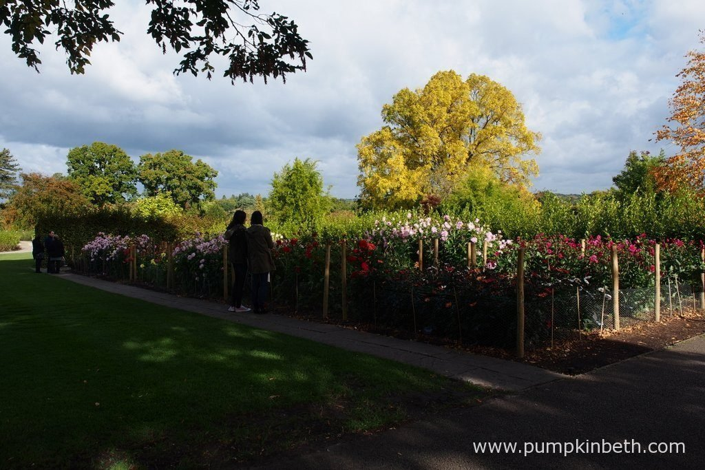 Visitors enjoying the gardens at Taste of Autumn 2016.