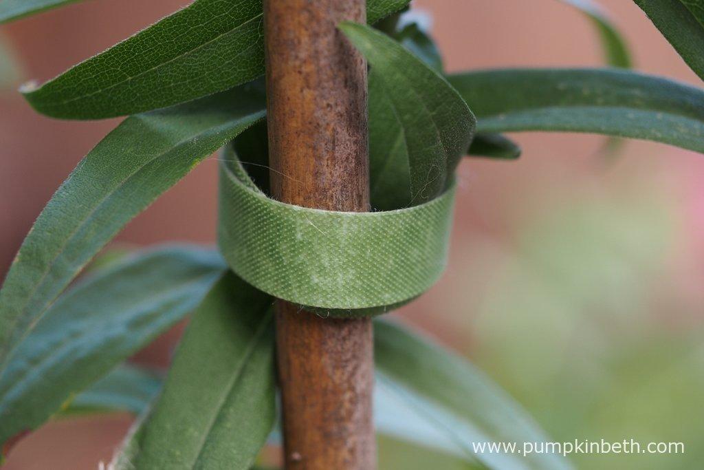 Reusable VELCRO® Brand One-Wrap Plant Ties - Pumpkin Beth