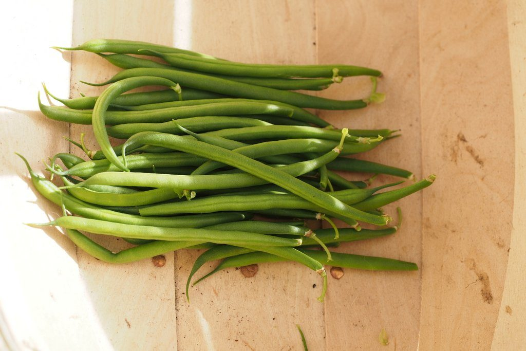 A harvest of French beans from plants grown in Carbon Gold All Purpose Compost, for my 2016 Peat Free Compost Trial.