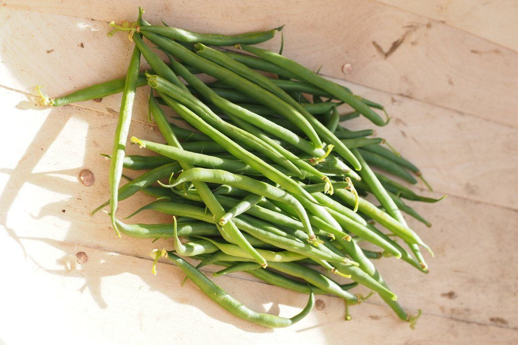 French beans harvested from plants grown in Sylva Grow Sustainable Growing Media, for my 2016 Peat Free Compost Trial.