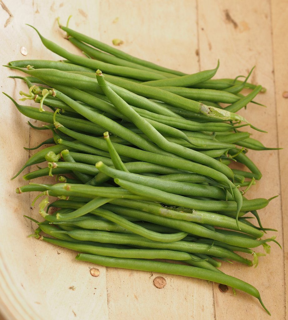 French beans harvested from plants grown in a 50/50 mix of Dalefoot Double Strength Wool Compost and Dalefoot Wool Compost for Vegetables and Salads, for my 2016 Peat Free Compost Trial.