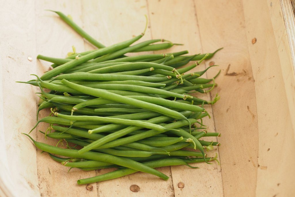 French beans harvested from plants grown in Dalefoot Wool Compost for Vegetables and Salads, for my 2016 Peat Free Compost Trial.