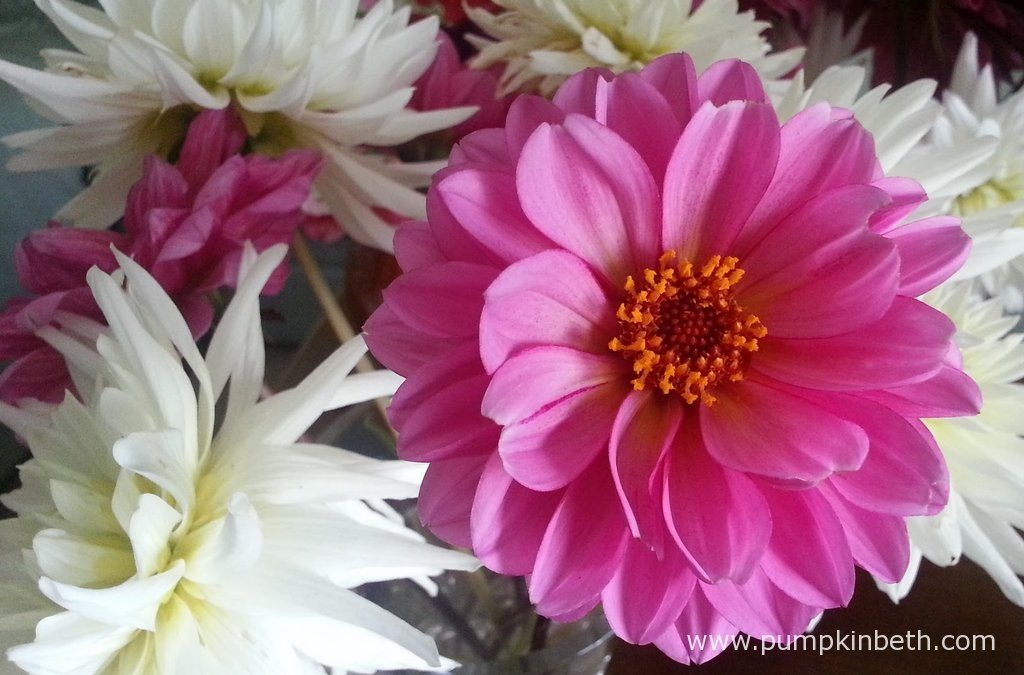 Beautiful easy to grow cut flowers to sow in april pumpkin beth dahlia classic rosamunde is a pretty dahlia that produces beautiful pink anemone like flowers which are very attractive to bees and butterflies mightylinksfo