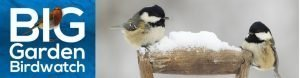 My RSPB Big Garden Birdwatch 2017