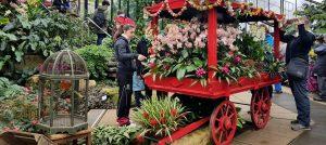 Kew Orchid Extravaganza 2017