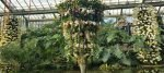 Behind the Scenes at the Kew Orchid Extravaganza 2017