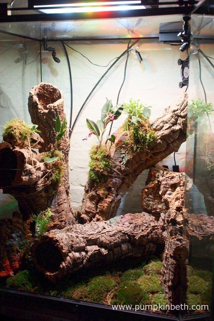 Building An Orchidarium Pumpkin Beth