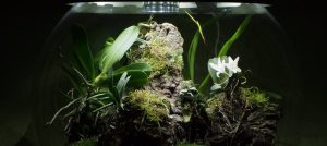 New Features of the New BiOrbAir Terrarium