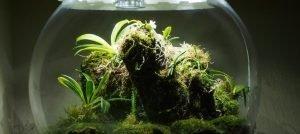 White Orchid BiOrbAir Terrarium Trial
