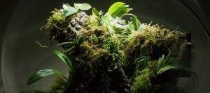 White Orchid BiOrbAir Terrarium Planting List