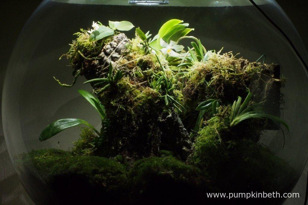 White Orchid Biorbair Terrarium Trial Pumpkin Beth