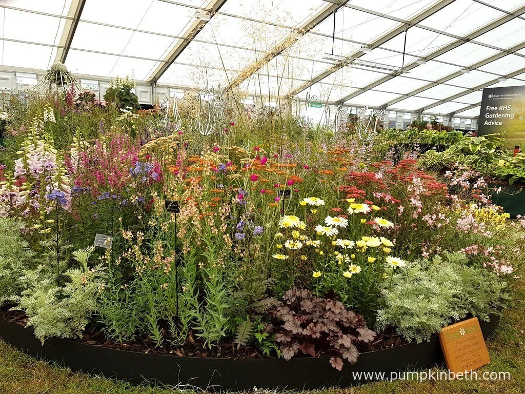 Specialist nurseries at the rhs hampton court palace flower show this gold medal winning exhibit of hardy herbaceous perennials and ornamental grasses was created by anne godfrey of daisy roots nursery workwithnaturefo