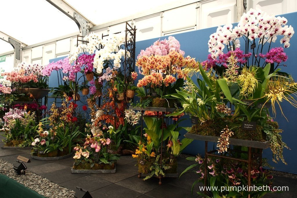 Specialist Nurseries At The Rhs Hampton Court Palace Flower Show 2017