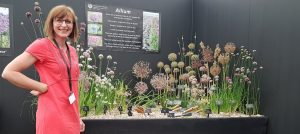 Jackie Currie, Alliums, and the RHS Hampton Court Palace Flower Show 2017