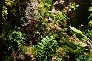 Orchidarium Planting List