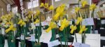 2018 Daffodil Shows and Competitions