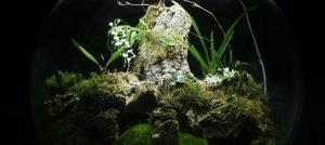 The Madagascar BiOrbAir Terrarium (part seven)
