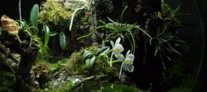 White Orchid BiOrbAir Terrarium Trial (part ten)