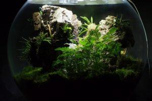 White Orchid BiOrbAir Terrarium Trial (part nine)