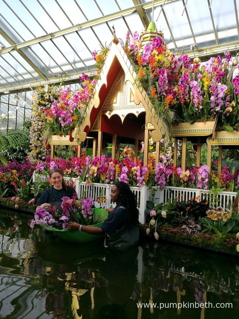 Botanic garden orchid festival fasci garden - Botanic gardens pumpkin festival ...