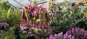 Kew Orchid Festival 2018 Thailand!