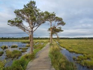 Peatlands and peat bogs: precious environments that need our protection
