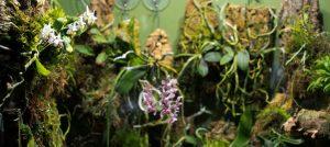 Orchidarium Update (part two)