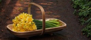 Trug Makers Daffodil Trug