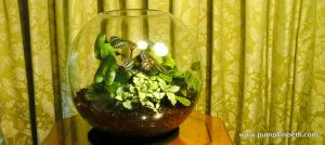 Glass Globe Terrarium Planting List