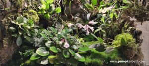 Orchidarium Update (part three)