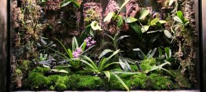 Rainforest Terrarium Planting List