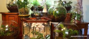 Planting List of Beautiful Vivarium, Terrarium, and Bottle Garden Plants!
