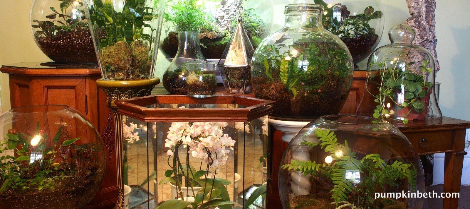 Planting List of Beautiful Vivarium, Terrarium, and Bottle Garden ...