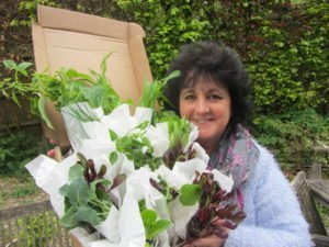 Special Offers: Pippa Greenwood's Vegetable Plants, Seeds, and Gifts